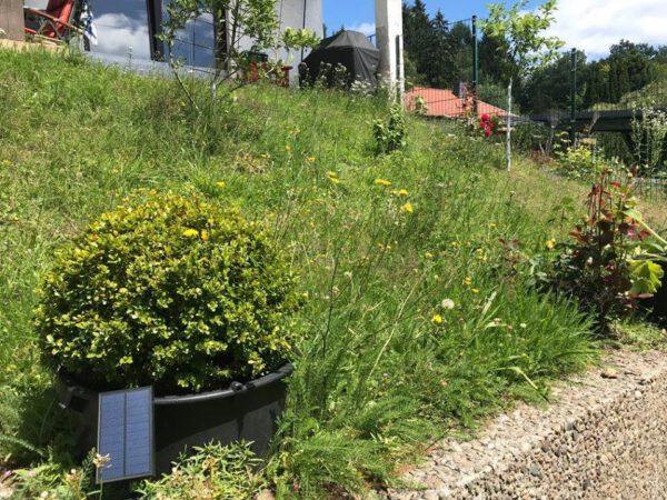 Wildblumenwiese für Bienen